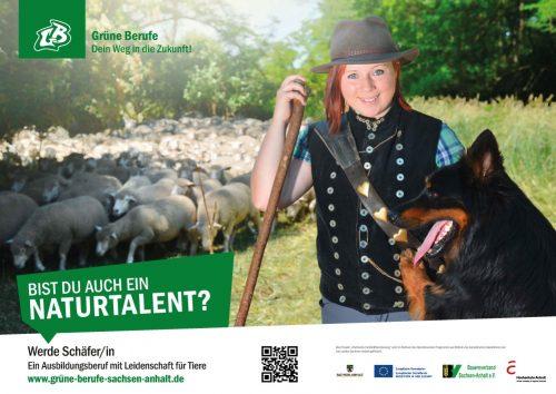 Tierwirt/in Schafhaltung
