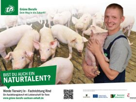 Tierwirt/in Schweinehaltung